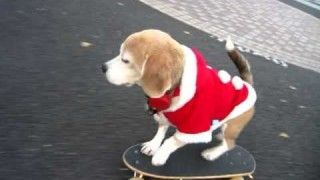 Amazing SKATE BOARDING DOG dressed in Santa outfit in Tokyo Japan