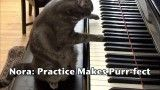 NORA : Practice Makes Purr-fect