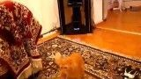 Cat vs Super Mario Sound Effects