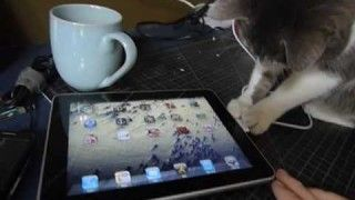 A cat and an iPad