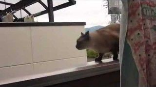 Cat Jumping from a roof FAIL