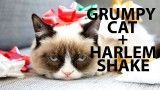 Grumpy Cat Does the Harlem Shake