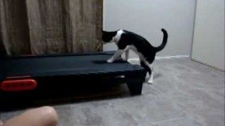 Cat vs Treadmill – FUNNIEST THING EVER