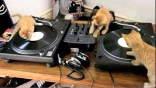 3 DJ Kittens sratching away on decks