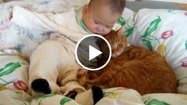 A japanese baby and a cat cudle each other